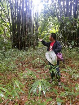 A local guide shows the group bamboo trees.