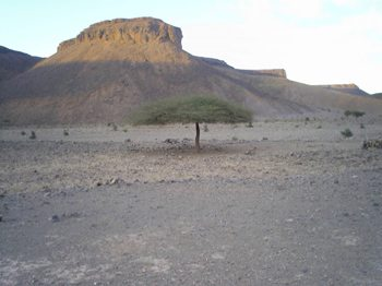A mesa in the Sahara.