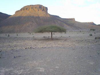 A mesa in the Sahara.