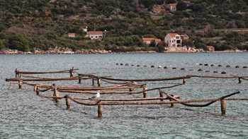 Wooden racks hold the baby oysters as they grow up.