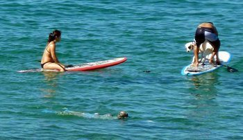 Dogs get into the paddleboard action too.