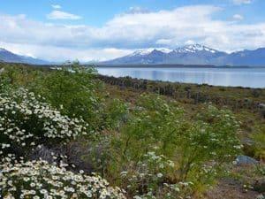 Scene from the road driving to Perito Moreno Glacier.