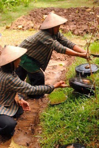 Indonesia: Thriving Permaculture in Yogyakarta
