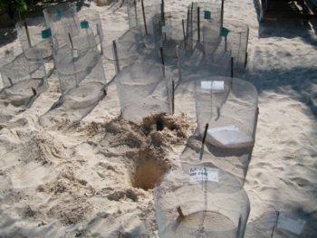 Empty turtle cages.