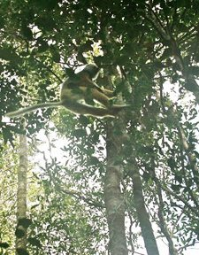 Tracking leaping lemurs through Mantadia. photos by Caitlin Prince.