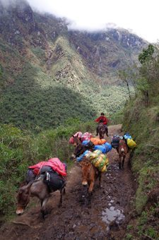 Mules carrying packs in Salkantay Pass, Peru. photos by Michael Molyneux.