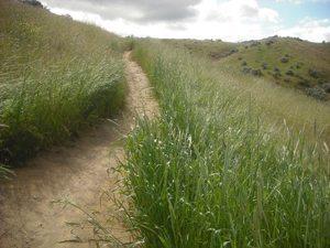 A bike trail in camelback park.