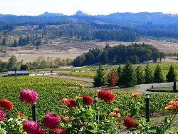 View from Kings Estate Winery