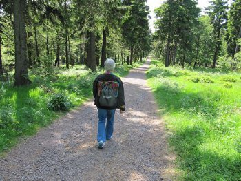 The Rennsteig Hiking Trail in the forest.