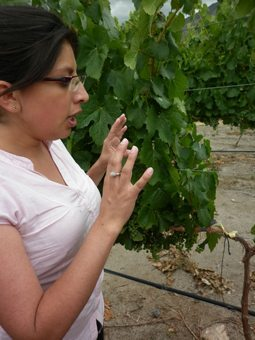 A sommelier explains the fine points of wine grapes.