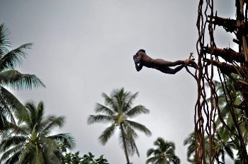 In Vanuatu, a local tradition is to jump from trees with vines attached to ankles. Thomas Perry photos.