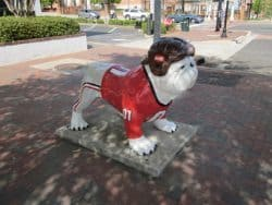 The mascot of the University of Georgia, the Bulldog.