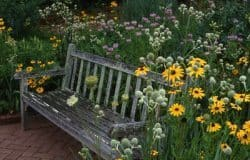An inviting seat at the Botanical gardens.