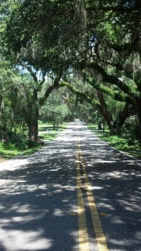 """Floral City's famous """"Avenue of Historic Oaks""""."""