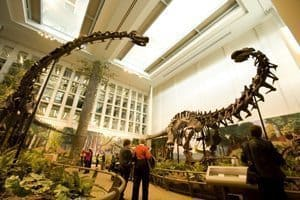 Inside the Carnegie Museum where many giant dinosaurs are on exhibit. Visit Pittsburgh photo