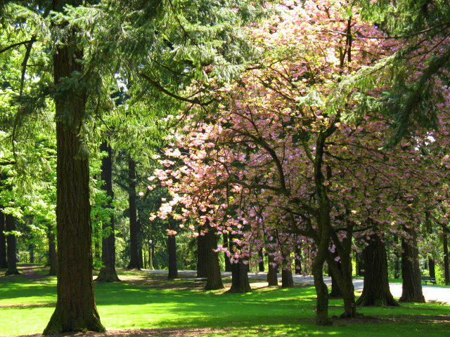 Visit the scenic Tabor Park