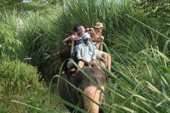 An elephant safari in the Himalayas.