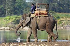 Ride and Indian Elephant