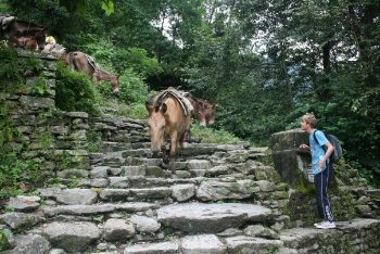 Poon Hill circuit horses