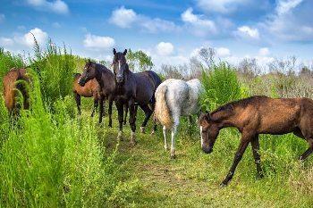 Gainesville, FL: La Chua Trail in Paynes Prairie