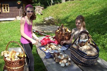 Czech Republic: A Day of Mushroom Hunting