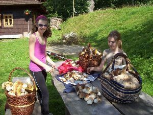 Baskets of mostly Pravak mushrooms to enjoy.