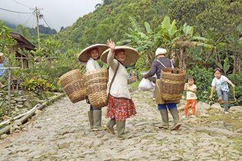 Gunang Mas Tea Estate