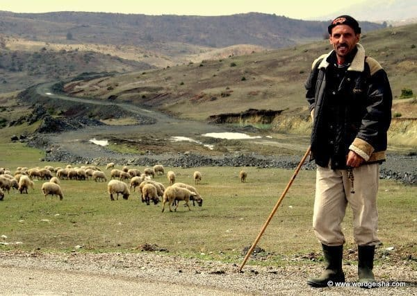 A shepherd by the road