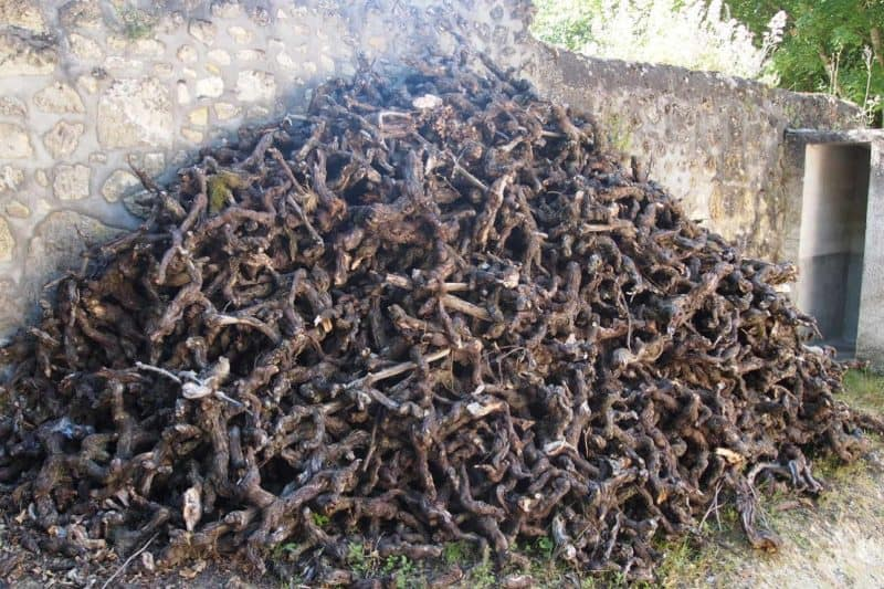 A pile of vine cuttings at a vineyard in France's Loire Valley.
