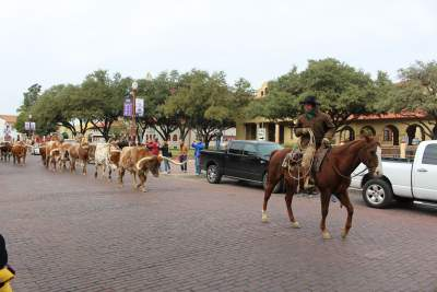 Fort Worth cattle drive. Stephanie DiCarlo photos.