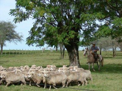 La Paz sheep ranch.