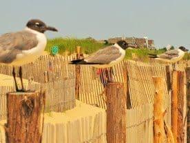 Sea gulls await lunch.