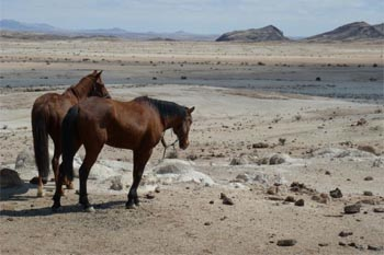Namibia: A Safari on Horseback