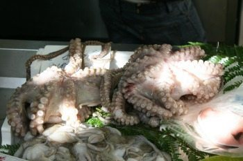 Octopus, or Polpi, is very popular in Italy.