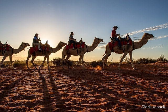 Camel expedition in the Outback. Didrik Johnck photo.