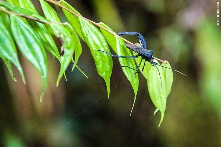 mashpi-insectlife