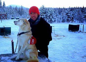 A Yukon mushing dog.