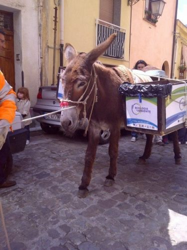 The Recycling donkey in Palermo, Sicily.