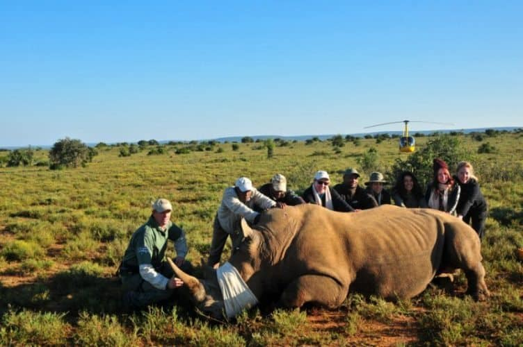 Working with guides during the rhino-darting-and-notching program.