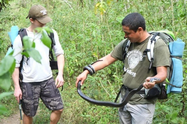 Handing a poisonous snake in the jungle of Panama. Ray Smith photos.
