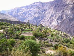 Colca Canyon in Peru's Andes.