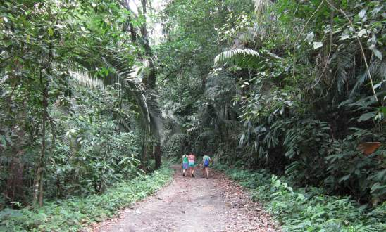 A jungle built by United Fruit in Tela, Honduras.