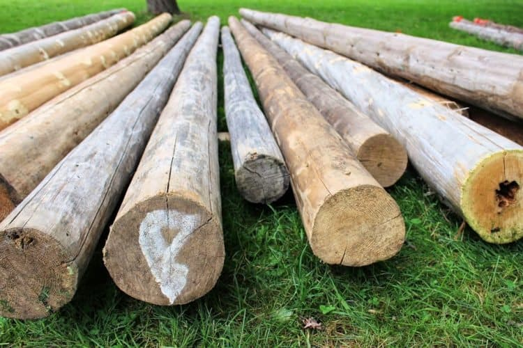 Cabers are these huge logs that are tossed during competition.