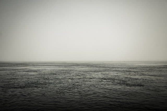 Fog, so thick you can cut it with a knife, during the whale watch.