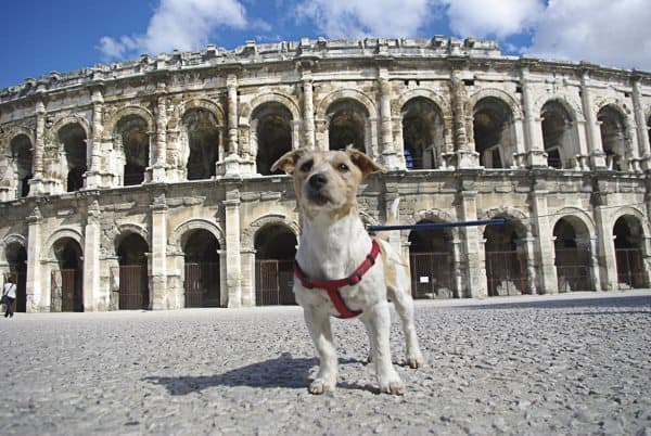 Plan a trip to France, and take your dog with you!