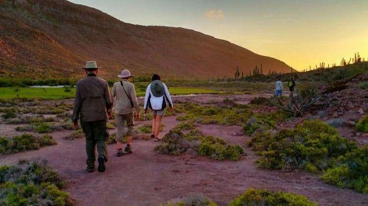 Sunset hike on Isla La Partida Sea of Cortez BCS Lauren Buchholz