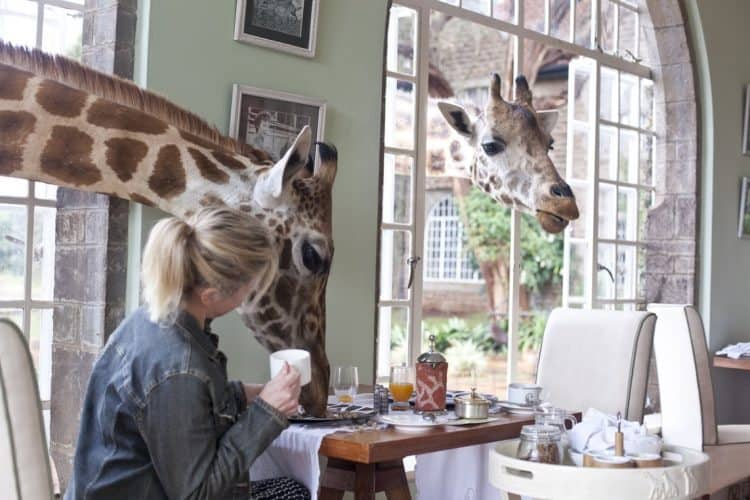 Kenya: Wild Awakening at Giraffe Manor, Nairobi