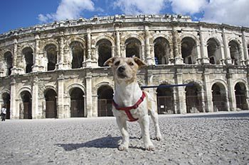 France: Touring Roman Ruins with Man's Best Friend