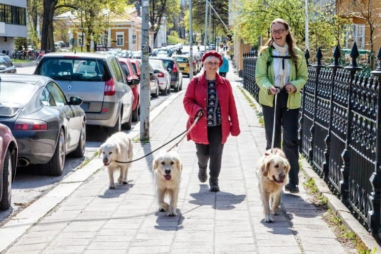 Walking dogs in Turku, Finland. Paul Shoul photo.