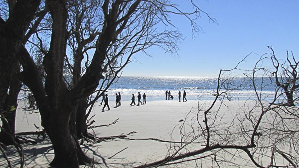 Boneyard Beach Sapelo Island